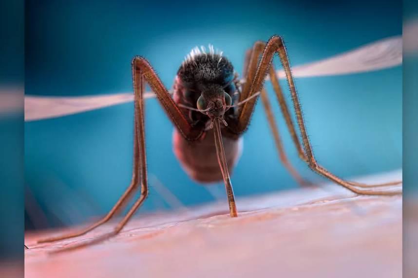 Vì sao muỗi tạo ra tiếng vo ve khi bay quanh con người?