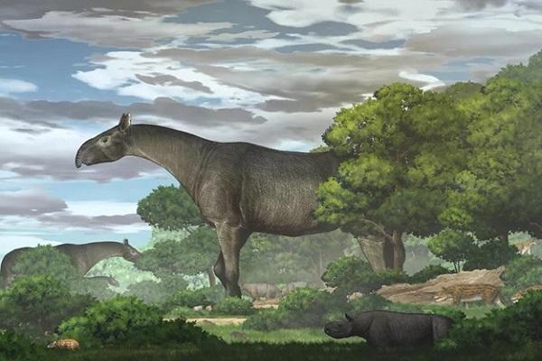 Phát hiện hóa thạch động vật có vú lớn nhất từ trước đến nay ở Trung Quốc
