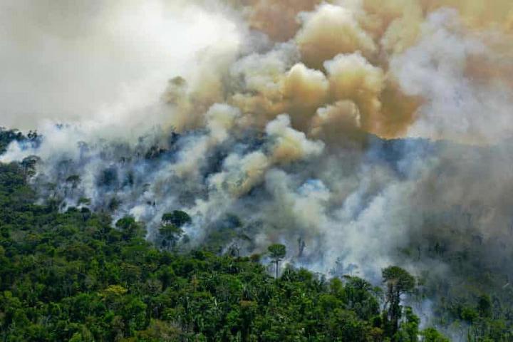 Một phần rừng Amazon thải ra nhiều khí CO2 hơn khả năng hấp thụ của mình
