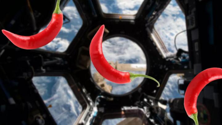 Các nhà khoa học đã bắt đầu thử nghiệm trồng ớt trên trạm vũ trụ ISS