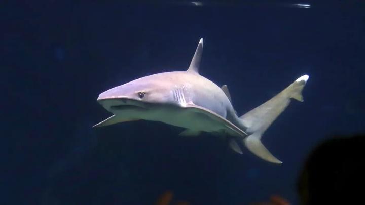 Sharp và Nikon nghiên cứu da cá mập để chế tạo điều hòa tiết kiện điện