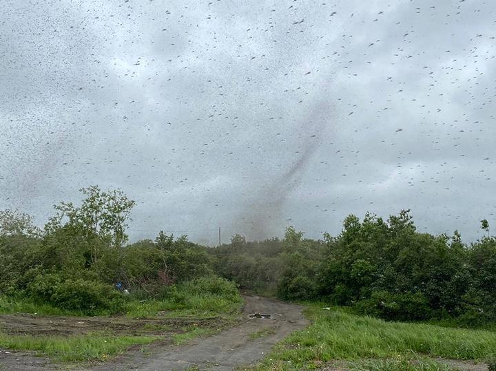 Một đàn muỗi khổng lồ tụ tập tạo thành cơn bão lớn tại Nga