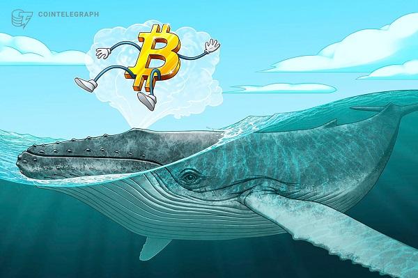 'Cá voi' tiếp tục bơm tiền vào Bitcoin