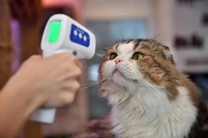 Điều gì sẽ xảy ra nếu một loại virus corona mới gây chết người nhiều hơn xuất hiện ở vật nuôi?