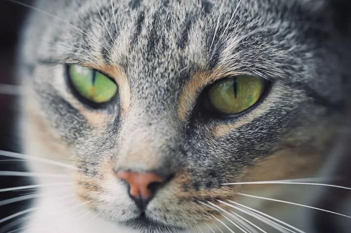 7 sự thật thú vị dành cho những người yêu mèo