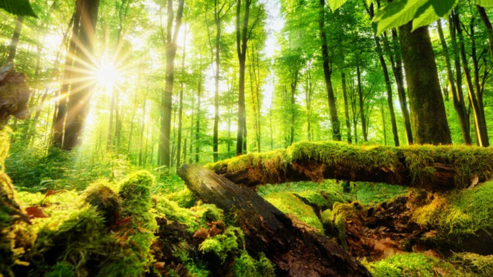 Ít ai biết rừng không chỉ giúp hấp thụ CO2 mà còn tạo mây bao phủ làm mát khí hậu