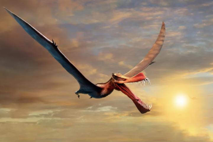 """Phát hiện hộp sọ loài """"rồng"""" từng gây khiếp đảm khắp bầu trời nước Úc"""