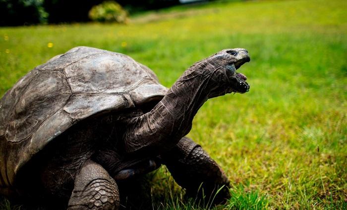 Vì sao rùa là động vật sống lâu nhất?