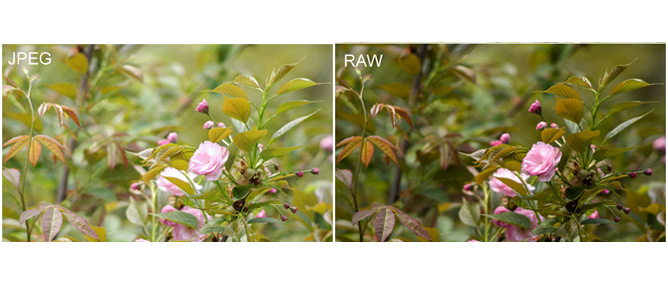 5 điều cần biết về chụp ảnh định dạng RAW