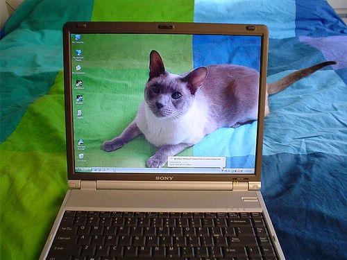 Chọn mua laptop theo kích thước màn hình và trọng lượng