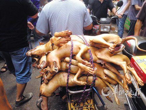 Cư dân mạng Trung Quốc thất kinh vì lễ hội thịt chó