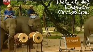 Dàn nhạc voi Thái Lan