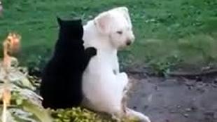 Video: Mèo tẩm quất cho chó cực chuyên nghiệp