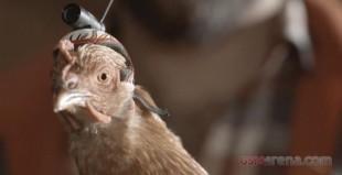 Quảng cáo tính năng OIS độc đáo của LG G2 với chú gà Lizzy
