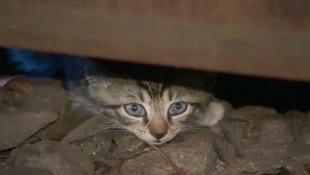 Biên tập viên truyền hình ăn phải phân mèo khi đang lên sóng