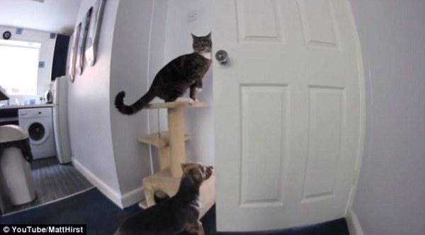 Sự kết hợp ăn ý giữa chó và mèo
