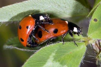 Hành vi đồng tính kì lạ của loài bọ