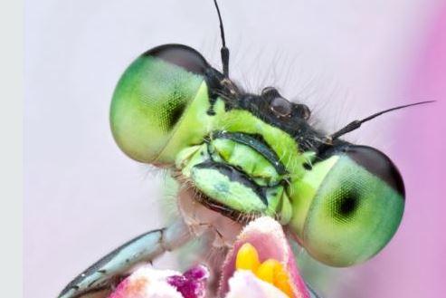 Xem gallery ảnh này xong, ai còn nói côn trùng là xấu?