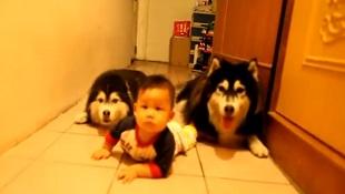 """""""Cuộc đua kỳ thú"""" của em bé và hai chú chó đáng yêu"""