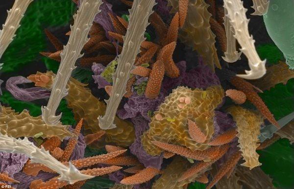 Khám phá vẻ đẹp bí ẩn của thế giới hiển vi