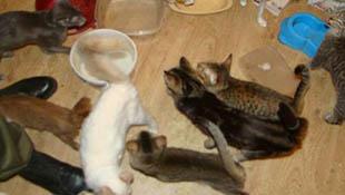 Kinh hoàng thí nghiệm tạo giống chó mới từ các bộ phận của... động vật chết