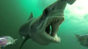 """Màn săn mồi ngoạn mục và tàn khốc của """"sát thủ đại dương"""""""