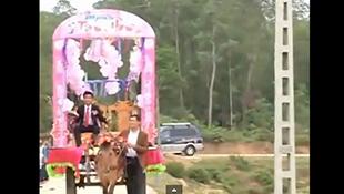 Đám cưới đón dâu bằng xe ngựa ở Hà Tĩnh