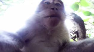 Khỉ táo tợn cướp máy ảnh để tự sướng